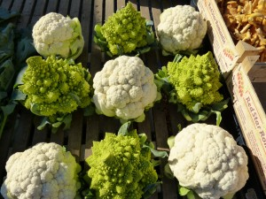 cauliflower_kohl_cabbage